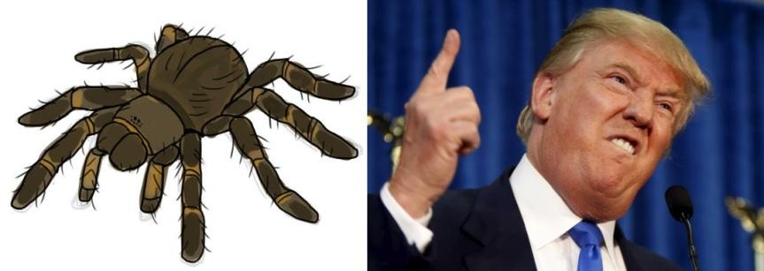 spideror