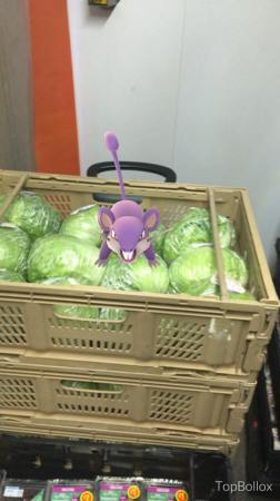 Rattata isn't helping the waste budget!